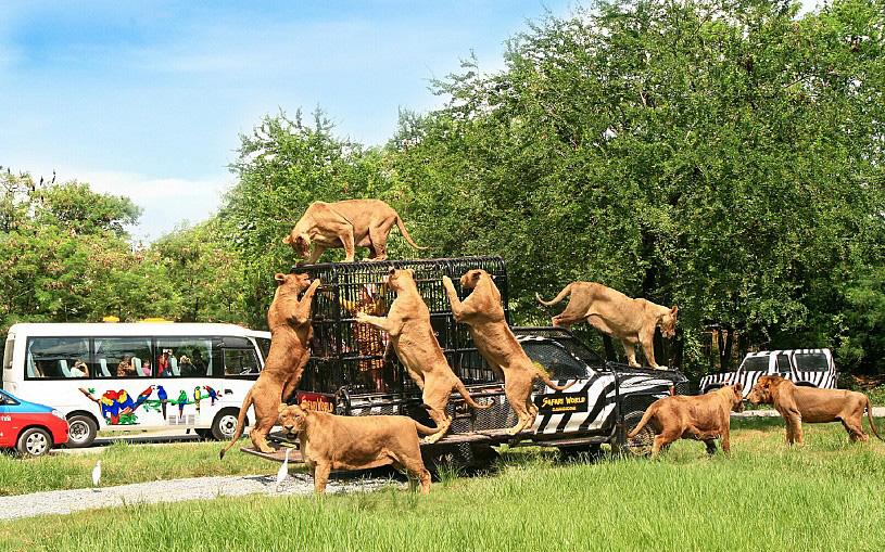 Vườn thú Safari Khao Kheow
